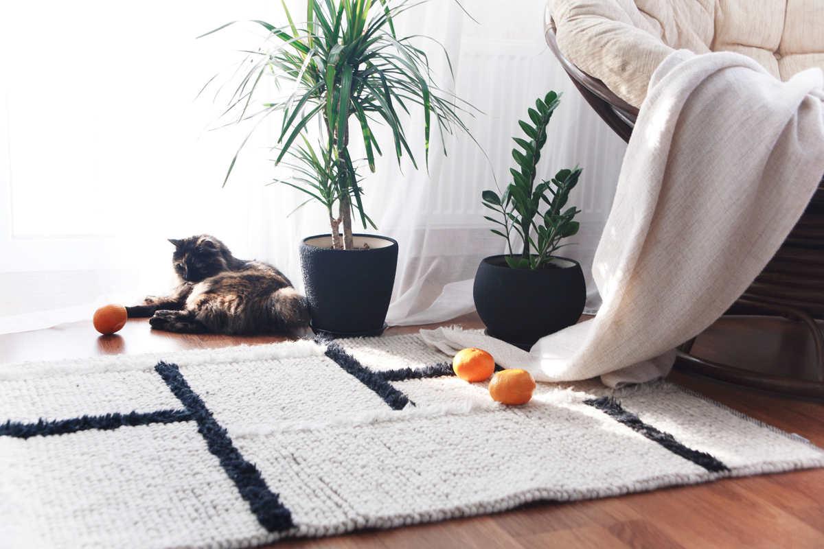 Tureckie dywany do pokoju